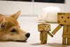 Yotsuba365 Day100 (Tetsuo41) Tags: dog shibainu yotsuba