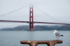 San Francisco (mripp) Tags: bird vogel landscape landschaft golden gate bridge brcke usa amerika america california kalifornien art kunst seascape fuji xpro2 foggy pacific vintage retro soft mellow weich xtrans
