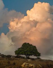 Before the Rain (Alex Savenok) Tags: israelnature israel autumnweather barfilia modiin clouds sky skydrama sunset tree landscape beforerain nikon