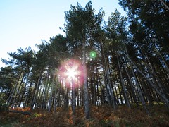 Autumn Sun (Sharky8572) Tags: autumn trees sun woodland countryside norfolk autumnsun