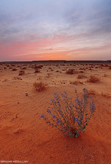 ( ibrahim) Tags: sunset sky sun nature clouds canon landscape photography eos sand desert image drought sands  ibrahim abdullah       50d     canon50d  tokina1116mm