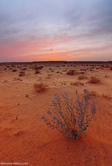 ( ibrahim) Tags: sunset sky sun nature clouds canon landscape photography eos sand desert image drought sands  ibrahim abdullah       50d     canon50d  tokina1116mm