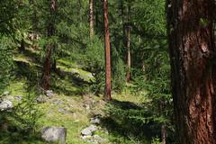 maerchenweg 2 (maxlabor) Tags: alps switzerland suisse alpine alpen svizzera dieschweiz graubünden grisons bever albulatal rhätischebahn albulavalley spinas märchenweg engadinvalley viaengadina rheatianrailway viaalbulabernina