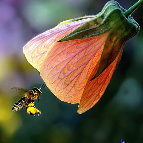 هل سمعت هذه المعلومه عن النحل من قبل ؟