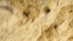 Cadiz (madskills421) Tags: ocean sea espaa beach water mar spain agua espanha playa arena espana spagna oceano