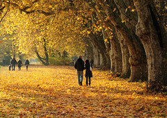 Romantic Autumn Walk (Habub3) Tags: park street wood city travel autumn light shadow people sun holiday plant flower tree fall texture nature leaves yellow forest germany landscape deutschland leaf reisen flora nikon europa europe map path walk urlaub