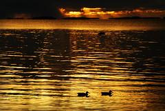Sunset sorsapari (Basse911) Tags: sunset sea water birds clouds islands ducks balticsea archipelago nder sorsia slaktis