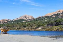 Ostriconi Beach-36 (marcdelfr) Tags: ocean travel sea france beach landscape mediterranean corse corsica streetphotography scenics stitchedpanorama ostriconi palasca
