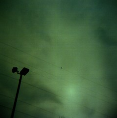 Lonely perch (liquidnight) Tags: above sky film birds clouds oregon analog mediumformat portland holga lomo xpro lomography crossprocessed solitude alone kodak streetlamp toycamera dream atmosphere overcast powerlines cables wires solo pacificnorthwest pdx dreamy isolation lonely 100 analogue grainy expired solitary vignetting ektachrome pnw streelight overhead isolated noisy 120n aether epn