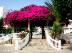 Prgola (Agus MC) Tags: flores stairs canon palmeras murcia rosas escaleras orton prgola guilas ortoneffect efectoorton ixus105 agusmc