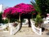 Pérgola (Agus MC) Tags: flores stairs canon palmeras murcia rosas escaleras orton pérgola águilas ortoneffect efectoorton ixus105 agusmc