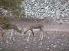 Texas Whitetail Hunt & Exotics - Kerrville 19
