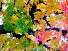 Season Of Color ....See Now....Before It's Gone...... (Sunciti _ Sundaram's Images + Messages) Tags: pink autumn orange color green art nature leaves yellow switzerland flora visualart dazzling brightspark natureswonders distellery abigfave aplusphoto agradephoto flickraward flickerdiamond diamondclassphotgrapher brillianteyejewel awesomescenery anobellife natureselegantshots flickrovertheshot alittlebeauty artofimages flickrmasterpieces veryimportantphotos artofatmosphere nationalgeographicexpplorer