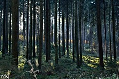 bavarian forest autumn (Marco Baumeister) Tags: wood autumn light brown sun black green nature forest 35mm canon germany way landscape bavaria woods stripes grn sonne wald hdr moos dunkel darkwood conifer nadelbaum nadelwald fahn straheln seonnenschein