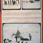 "<b>Cold Recall Slide</b><br/> Roald Amundsen's (1872 - 1928) Norwegian South Pole Expedition Cold Recall Slides January 3 - January 23, 2013<a href=""//farm9.static.flickr.com/8185/8359339052_da6487f46d_o.jpg"" title=""High res"">∝</a>"
