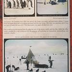 "<b>Cold Recall Slide</b><br/> Roald Amundsen's (1872 - 1928) Norwegian South Pole Expedition Cold Recall Slides January 3 - January 23, 2013<a href=""http://farm9.static.flickr.com/8185/8359339052_da6487f46d_o.jpg"" title=""High res"">∝</a>"
