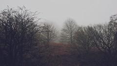 Yorkshire countryside fog