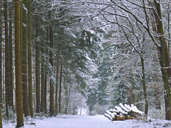 Through the woods (dolorix (on/off)) Tags: wood schnee snow tree forest path explore holz wald spruce baum beech weg fichte buche dolorix
