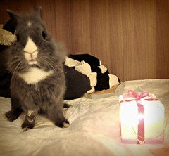 A little gift from me.. hope you like it :) (Brionivich) Tags: pink friends italy cute rabbit bunny art love me beautiful animal photo amazing friend kiss warm soft italia heart little you conejo gorgeous cutie gift be omg pure naure needy coniglio photograpy