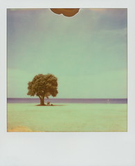 holidays in montevideo (2) (dfuster74) Tags: trees polaroid uruguay photography instant analogue pxfilm dfuster74