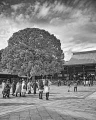 Tourists and Tree [Explored] (AB 7) Tags: blackandwhite tree japan tokyo shrine tourists meiji