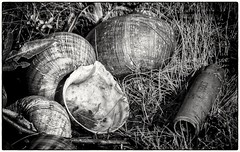 Evidence of animals and human living in natural harmony with shared shell deposits.. (Andy J Newman) Tags: shell nature cartridge bullet man human everglade grass nikon d7100 silverefex florida