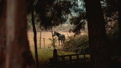 Abandoner (juanpablo.sl) Tags: old winter horse orange cloud brown mountain color film nature vintage movie 50mm countryside nikon open cloudy country style ground blackhorse d7200 nikond7200
