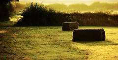 Time of the Season. (elam2010) Tags: dawn landscape fields wirral countryside rural sony nex7 trees hedges sunrise bales