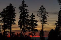 Abendrot (blumenandy) Tags: baum baumstamm baumstumpf bayerischerwald gebirge lam landschaft osser pflanze sommer sonnenuntergang wald