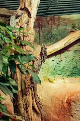 Acuario Agosto 2016 (79) (Fernando Soguero) Tags: acuario zaragoza acuariodezaragoza aragn turismo aquarium nikon d5000 fsoguero fernandosoguero