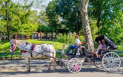 Horse Carriage Ride (deepaqua) Tags: nyc horse horseandcarriage centralpark