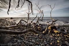 Beach (hansekiki ) Tags: rgen ostsee balticsea strand beach jasmund nationalpark landschaften zeissdistagont2815mm distagon1528ze distagont2815 canon 5dmarkiii