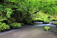 160524_162635_CB_0336 (aud.watson) Tags: europe czechrepublic bohemia decindistrict hrenska riverkamenice kamenicegorge edmundgorge gorge ravine river water rocks rockformation cliffs
