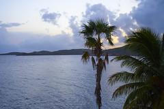 Palm (ericvilendrerphoto) Tags: stthomas virginislands ocean palm trees sand footprints water vacation honeymoon wedding trip travel sony sonyzeiss35mm14za sonya7ii alpha prime lens