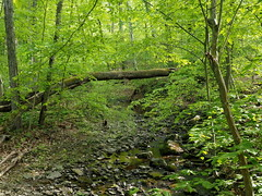 Stream in the woods (pilechko) Tags: bowmanshill preserve woods nature water stream color light green buckscounty pennsylvania trees newhope
