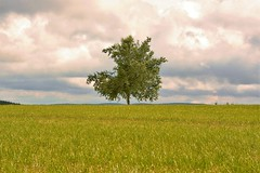 Lonely tree (laura.foto) Tags: tree nature germany schwartzwald blackforest