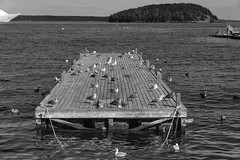 Boat Dock Owned! (Bar Harbor, Maine) (*Ken Lane*) Tags: geo:lat=4439190305 geo:lon=6820363998 geotagged unitedstates usa atlanticocean bw barharbor barharbormaine baw bird birds blackwhite blackandwhite blackwhitephoto blacknwhite bnw boat boatdock dock downtownbarharbor hancockcounty hancockcountymaine harborsidemarina maine mdi monochrome monochromeblackandwhite mountdesertisland nikon northeastatlantic northeastunitedstates northeasternunitedstates ocean oceanscape seagulls travel travelphotography water waterscape