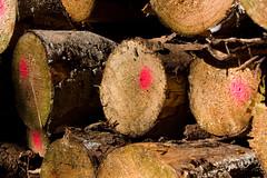 ckuchem-8298 (christine_kuchem) Tags: abholzung baum baumstmme bume einschlag fichten holzeinschlag holzwirtschaft wald waldwirtschaft