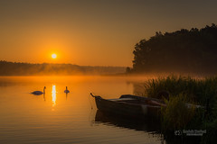 Foggy sunrise at the lake (tbnate) Tags: tbnate nikon nikond750 d750 goldenhour water lake sunrise reflection boat swan swans fog landscape nature sun trees forest fall dusk outdoor outside poland polska samociek autumn ~themagicofcolours~xii