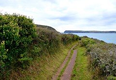 South West Coast Path (rustyruth1959) Tags: nikon nikond3200 tamron16300mm outdoor cornwall hawkerscove swcoastpath padstow path sea camelestuary estuary water coast bushes headland pentirepoint cliffs green atlantic sky clouds