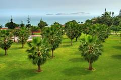 Palm trees in Miraflores, Lima (Rich3012) Tags: ocean trees sea peru america island coast san pacific lima south palm shore lorenzo isle isla miraflores