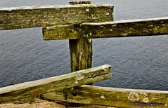 Wood (Eddietherocker) Tags: ocean wood sea nature landscape wildlife parks marincounty seashore