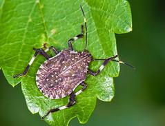 _DSC7563b (aeschylus18917) Tags: park macro nature japan insect nikon g micro  saitama nikkor f28 vr hanno pxt saitamaken koma 105mm  105mmf28  kinchakuda 105mmf28gvrmicro saitamaprefecture d700 nikkor105mmf28gvrmicro  nikond700 danielruyle aeschylus18917 danruyle druyle    hann hannshi kinchakudapark