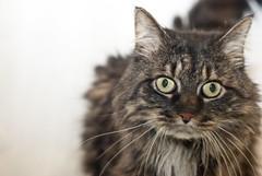 Fluffy (Clara S.) Tags: dog cute cat kitten shelter d80 summer2012 arlsri animalrescueleagueofsouthernrhodeisland