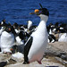"Imperial Shag & Rockhopper Penguins • <a style=""font-size:0.8em;"" href=""http://www.flickr.com/photos/88714479@N07/8093339192/"" target=""_blank"">View on Flickr</a>"