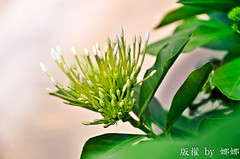 Simple Beauty ( Nana) Tags: life light flower green beautiful colorful natural taiwan  taiwan