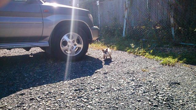 Today's Cat@2012-10-19