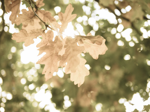 Autumn leaves by James E. Petts, on Flickr