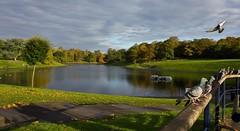 Sefton Park lake 2 (Paul-Farrell) Tags: park lake reflection day cloudy pigeons sefton
