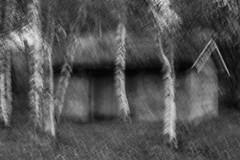 Behind birch (Karel Krizak) Tags: bw tree forest flash birch bulding creativephotography